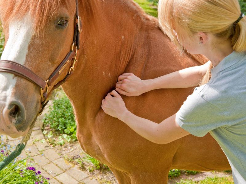 PraxisPur-12-Tier-Physiotherapeut-Chiropraktiker-Heilpraktiker-Nienburg-Minden