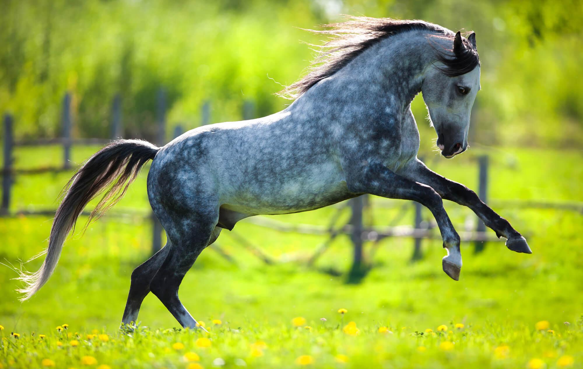 Gelenke beim Pferd mit Kräutern unterstützen