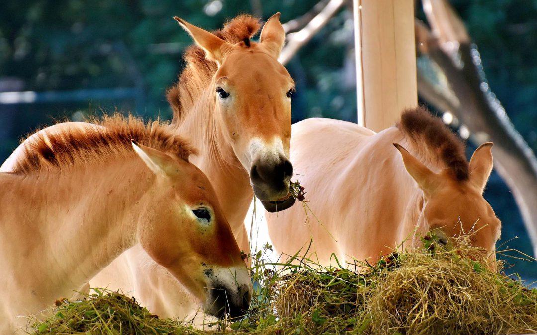 Kräutermischung für Pferde die Husten